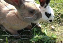 Earn Money from Rabbit Farming.
