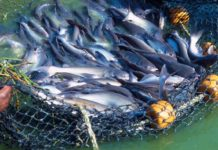 Earn money with fish farming.