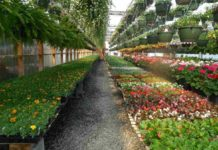 Plant Nursery Business Plan.