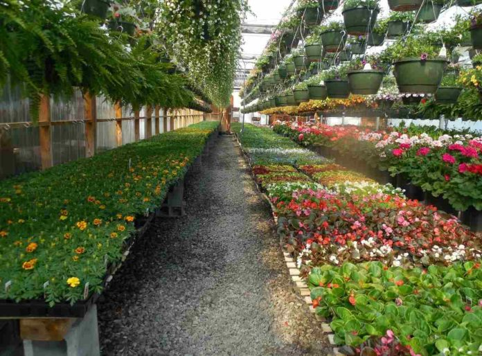 Plant Nursery Business Plan Cost