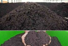 How to Make Money from Organic Fertilizer Production Business.