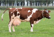 How to Make Money from a Dairy Farming Business.