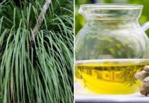 How to Make Money from Lemongrass Oil Extraction Business.