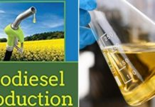 How to make money from biodiesel production.