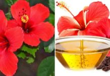 How to Make Money from Hibiscus Oil Extraction Business.