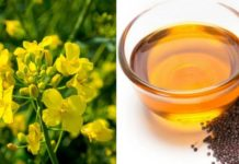 How to Make Money from Mustard Oil Extraction Business.
