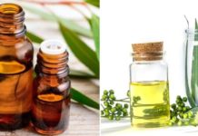 How to make money from eucalyptus oil manufacturing.