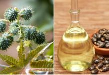 How to make money from castor oil extraction business.