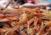 How to Make Money from Prawn Rearing Business.
