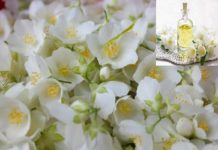 How to Make Money from Jasmine Oil Manufacturing.