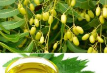 How to make money from neem oil extraction business.