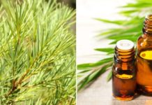 How to Make Money from Tea Tree Oil Extraction Business.