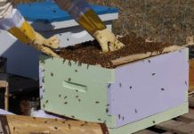 How to make money from Beekeeping business.