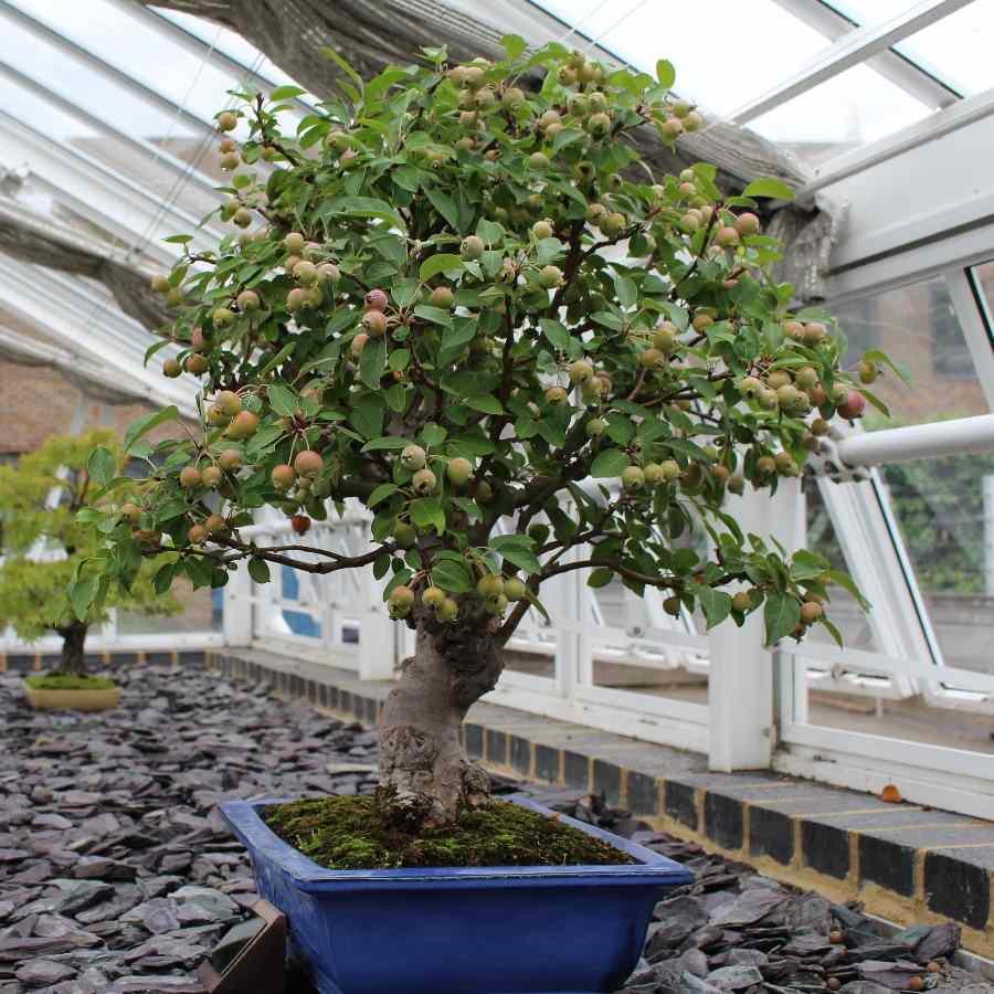 Bonsai Tree Farming How To Start For Profit Idea2makemoney